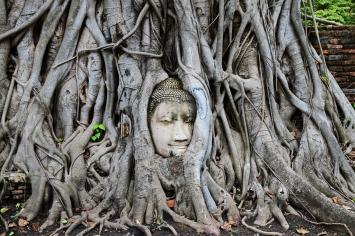 Ayutthaya - Buddha head
